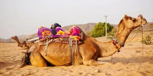 Rajasthan Rainbow *